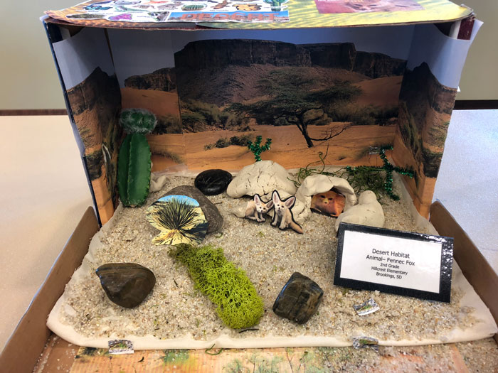 Diorama of desert habitat created by children during Innovation Learning Lab.