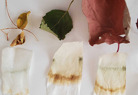 Explore Leaf Color With a Fun Chromatography Experiment